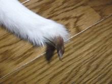 鴻巣の整体院ささき 整体よもやま話-ビチョビチョに舐めた尻尾